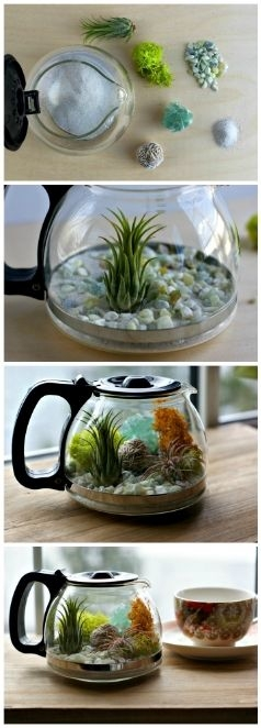 interieuradvies koffiepot aquarium
